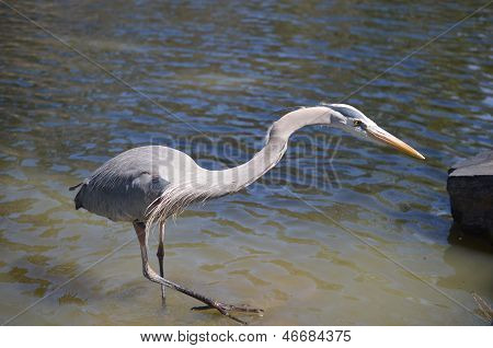 Reaching Crane