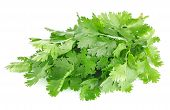 picture of eatables  - fresh leaves of cilantro isolated on white background - JPG