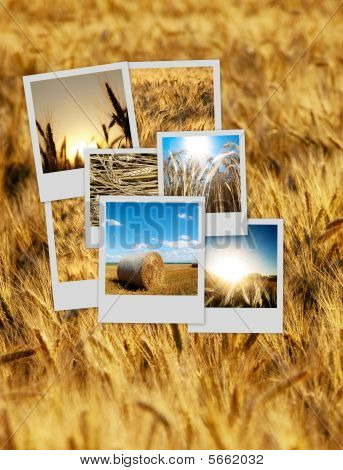 Pile Of Over A Wheat Background