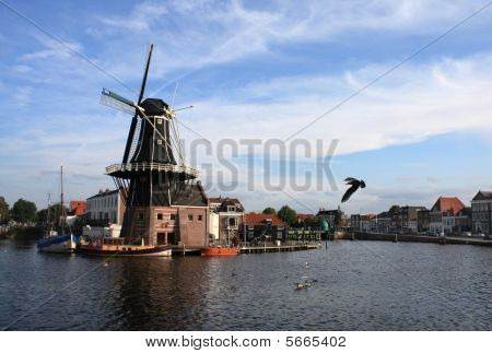Windmill and a bird