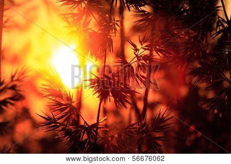 Plants Silhoette