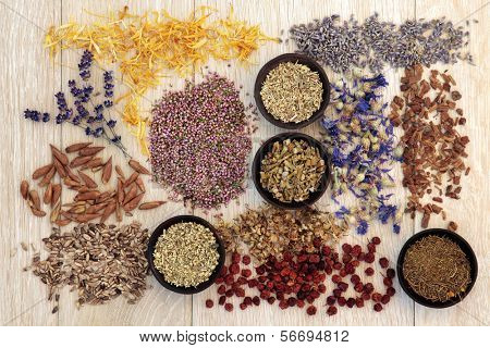 Medicinal herb selection also used in witches magical potions over wooden background.