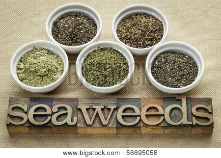 bowls of seaweed diet supplements (bladderwrack, sea lettuce, kelp powder, wakame and Irish moss) with letterpress wood typography