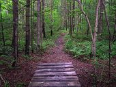 image of appalachian  - Boardwalk along the Appalachian Trail in Pennsylvania - JPG