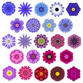 stock photo of kaleidoscope  - Big Selection of Various Colorful Kaleidoscopic Mandala Flowers Isolated on White - JPG