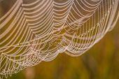 stock photo of cobweb  - The spider web  - JPG