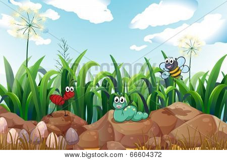 Illustration of the insects above the rocks