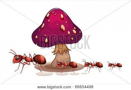 Illustration of a colony of ants near the mushroom on a white background