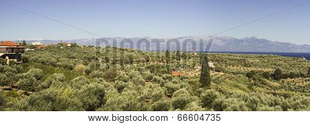 Peloponnese Countryside