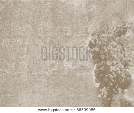 Vintage Texture With Grape Sketch