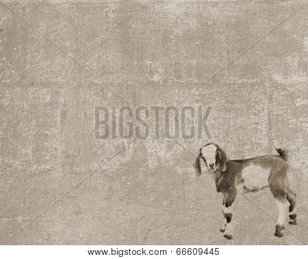 Vintage Texture With Standing Goatling