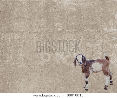 Vintage Texture With A Goatling
