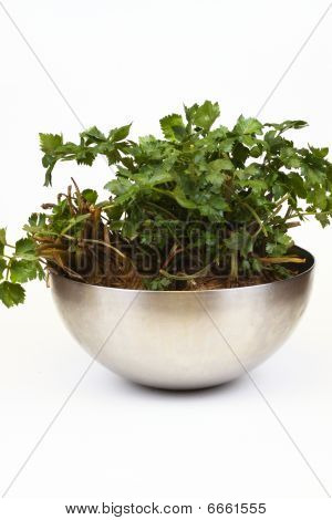 Celery, Leaves And Root In A Bowl