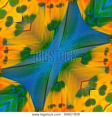 Great Background Pattern Made From Blue And Gold Macaw Bird Feathers