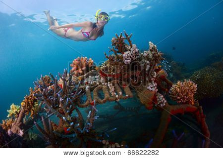 Young lady snorkeling over metal structure with baby corals in the reef restoration area in Pemuteran village. Bali island