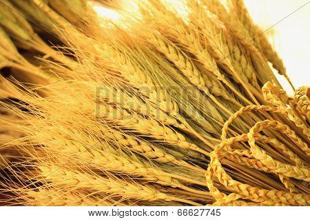 Wheat Ears Background