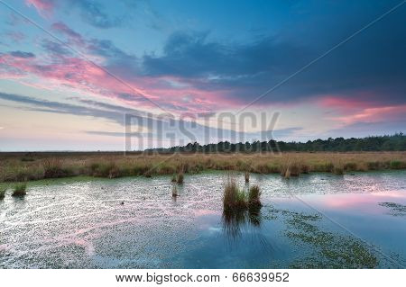 Sunset Over Wild Swamp In Summer