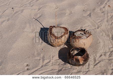 Three Coconuts On Sand