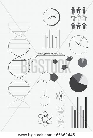 Infographics Deoxyribonucleic Acid (dna)