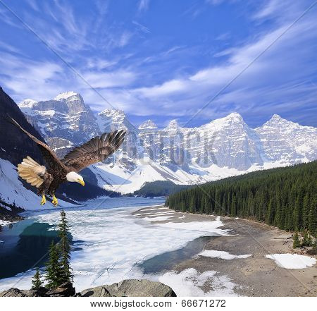Bald eagle on Moraine lake background.