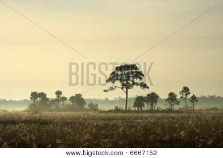 Early Morning in Big Cypress National Preserve