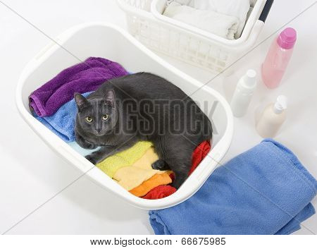 Cat In White Plastic Basket With Colorful Laundry To Wash