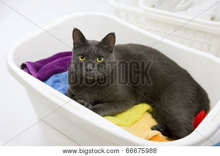 Funny Cat Wash - Cat In White Plastic Basket With Colorful Laundry To Wash