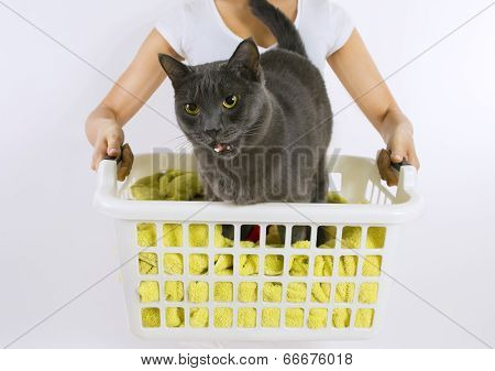 Funny Cat Wash