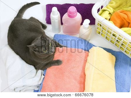 Cat On Colorful Laundry To Wash