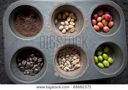 stages of coffee beans