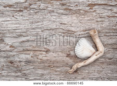 Seashell And Dry Branch On The Old Wood