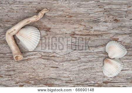 Seashells And Dry Branch On The Old Wood