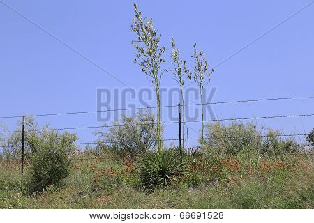 Yucca Plant Against Blue Sky
