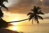 stock photo of raja  - Coconut palm on tropical island beach at sunset in Raja Ampat - JPG