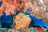 picture of grouper  - A Grouper resting on the metal of an underwater wreck