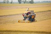 stock photo of combine  - Farm worker harvesting rice with Combine machine in rice field - JPG
