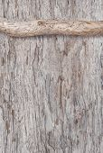 stock photo of rude  - Dry branch on the old rude wooden background - JPG