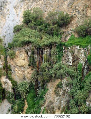 Vegetation At Colca Canyon