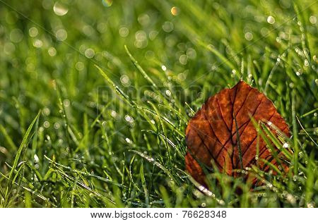 Backlit Leaf on Grass