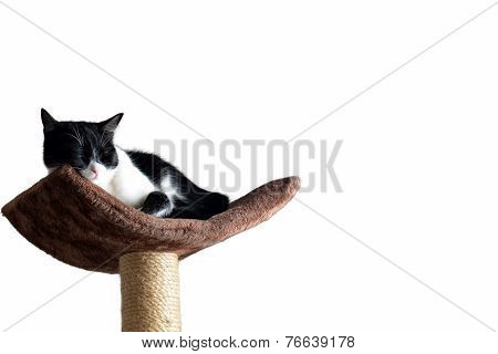 Happy Cat Taking Rest On A Tower