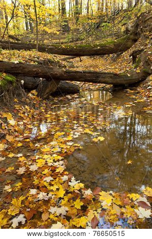 Autumn Leaves In A Stream Bed.