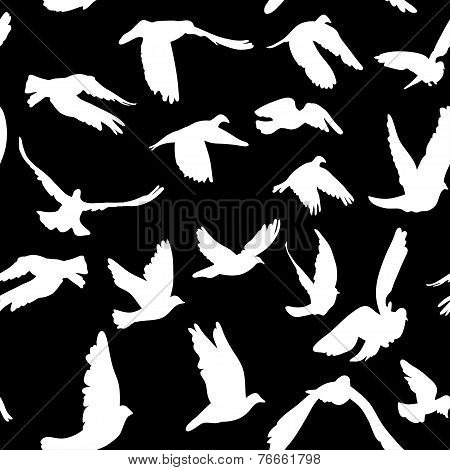 Doves And Pigeons Seamless Pattern Black And White For Peace Concept And Wedding Design. Vector