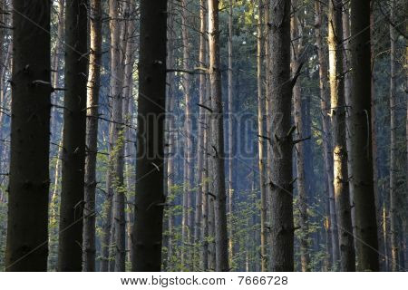 Forest Abstract Background.