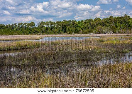 Tidewater Near Swansboro, NC