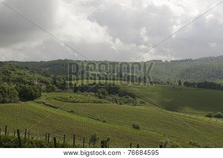 Cloudy Chianti