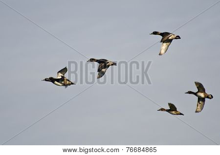 Six Ring-necked Ducks Flying In A Cloudy Sky