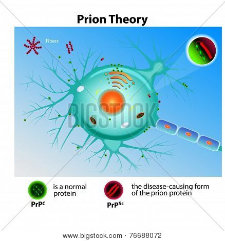 Prion Theory