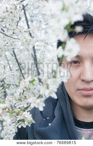 Young Asian man with a serious enigmatic expression partially concealed behind a branch of white spring cherry blossom looking directly at the camera
