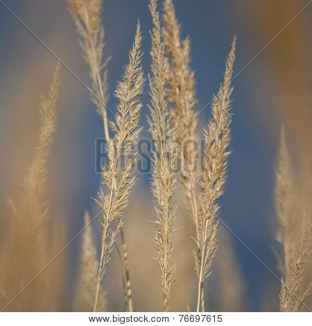 Stalk Grass Stems, Large Detailed Texture Macro Closeup, Yellow, Beige, Textured Background, Gentle