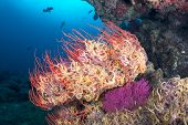 stock photo of plankton  - A sea fan is engulfed with small - JPG